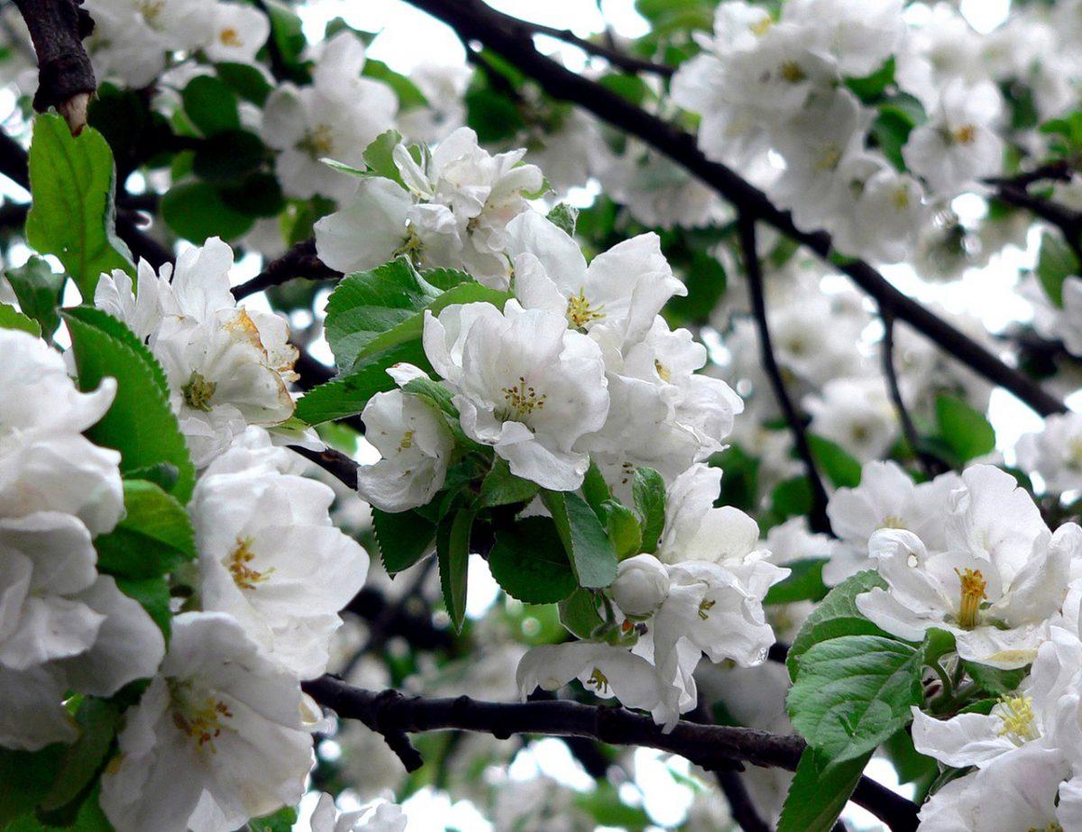 Piękne kwiaty mogą wyrosnąć w każdym miejscu