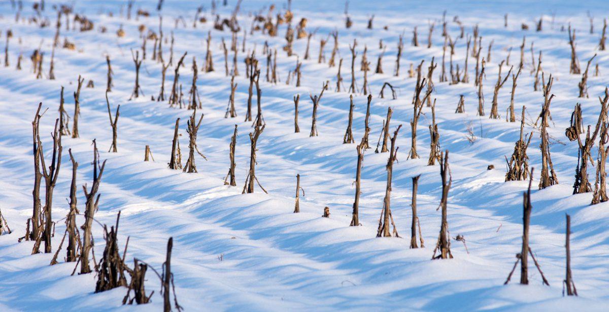 Zabezpieczanie tarasu na zimę